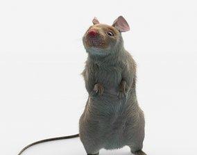 3D model mouse rat