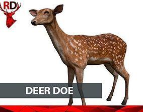 3D model Deer doe