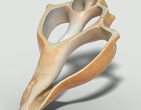 3D model Cut Seashell