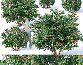 3D model Physocarpus Opulifolius Nr1 Five sizes H80-260 cm