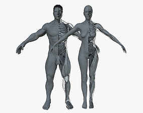 Ultimate Anatomy Project Combo 3D model