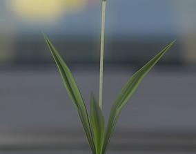 3D model White Flower - Verion 4 - Object 14