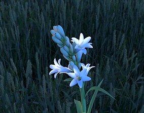3D model Tuberose Blooming flower animation