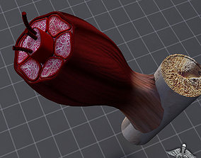 3D Muscle Tissue