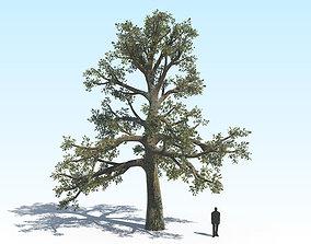 Oak Tree 06 PBR 3D model
