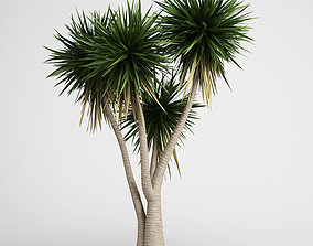3D model CGAxis Yucca 09