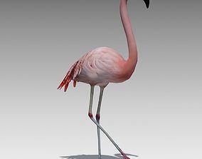 Flamingo Animated 3D asset