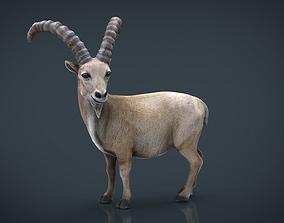 Wild goat 3D asset