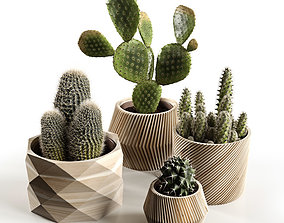 Cactus Collection 3D
