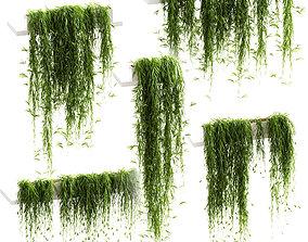 Hanging plants for shelves - 5 models - set 3