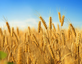 3D plant collection vol01 Wheat Field PBR
