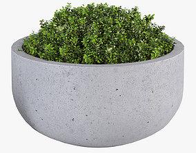City bowl M 3D