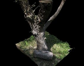 Big Tree birch 3D model