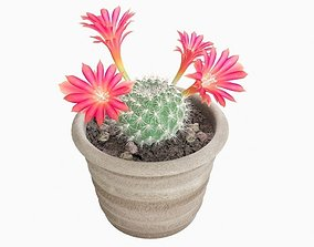 Cactus plant succulent 3D
