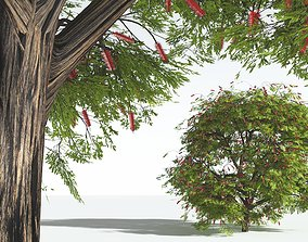 3D EVERYPlant Scarlet Bottlebrush 12 --15 Models--