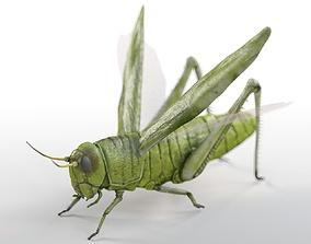 3D model game-ready Grasshopper Rigged
