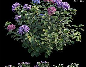 3D model Hydrangea Plant set 33 bush