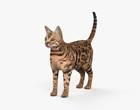 Bengal Cat HD 3D model