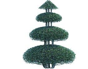 Bush plant 3D model rigged