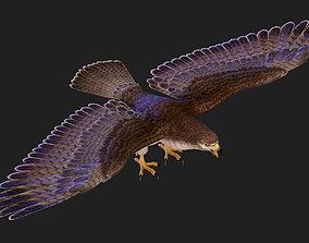 3D cartoon Eagle