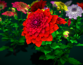 3D asset Flower Mexico