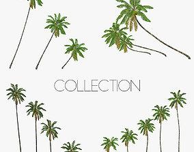 3D asset Coconut palm tree Collection - Low