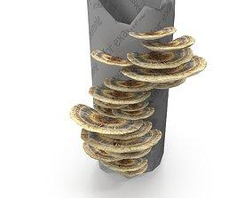 Tinder fungus V5 3D model