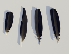 feathers - photoscanned 3D asset