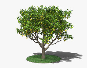 3D model Lemon Tree