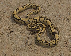 Common Python 3D model