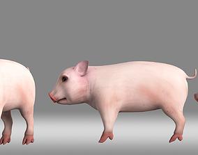 3D model pig piglet poultry animation role