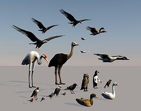 Game ready bird collection 3D asset
