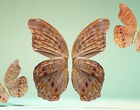 3D asset Butterfly-4