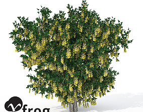 3D model XfrogPlants Golden Chain
