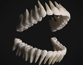 3D asset Photorealistic human teeth