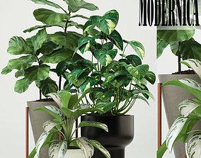 3D model Plants collection 74 Modernica pots