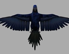 3D Parrot Macaw