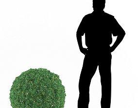 Buxus bush 3D model