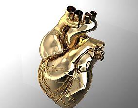 human heart obj 3D