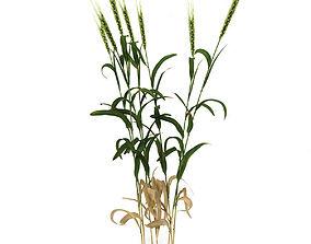 plant Grass 3D model