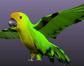 Parrot B 3D asset