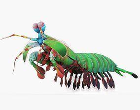 Mantis Shrimp 3D asset low-poly