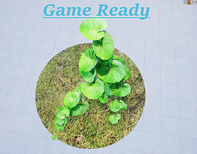 Brazilian Pennywort - hydrocotyle leucocephala 3D