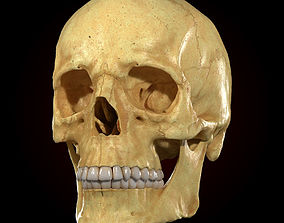 Realistic Skull Teeth and Jaw 3D Model and Sculpt