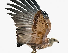 3D model Griffon Vulture - rigged - animated