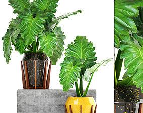 3D Tropical plant shrubs leaves