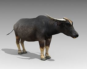 Water Buffalo Animated 3D asset low-poly