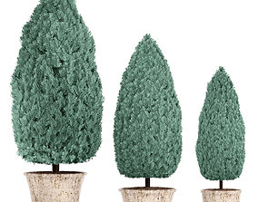 3D Cupressus and Thuja blue