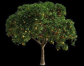 3D model Orange Tree 2