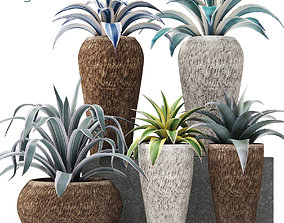 Agave collection 3D model